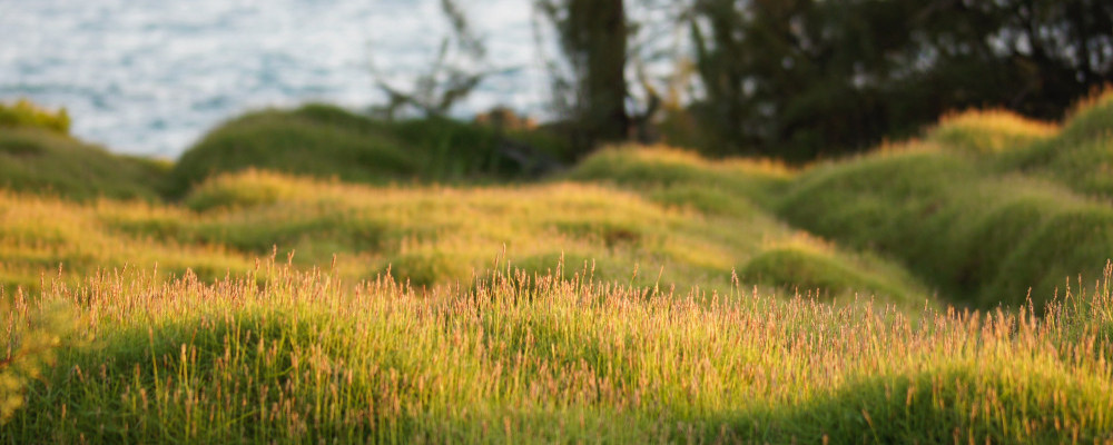 How-to-Treat-Insomnia-Naturally-Lavender-Has-Great-Benefits-Grass