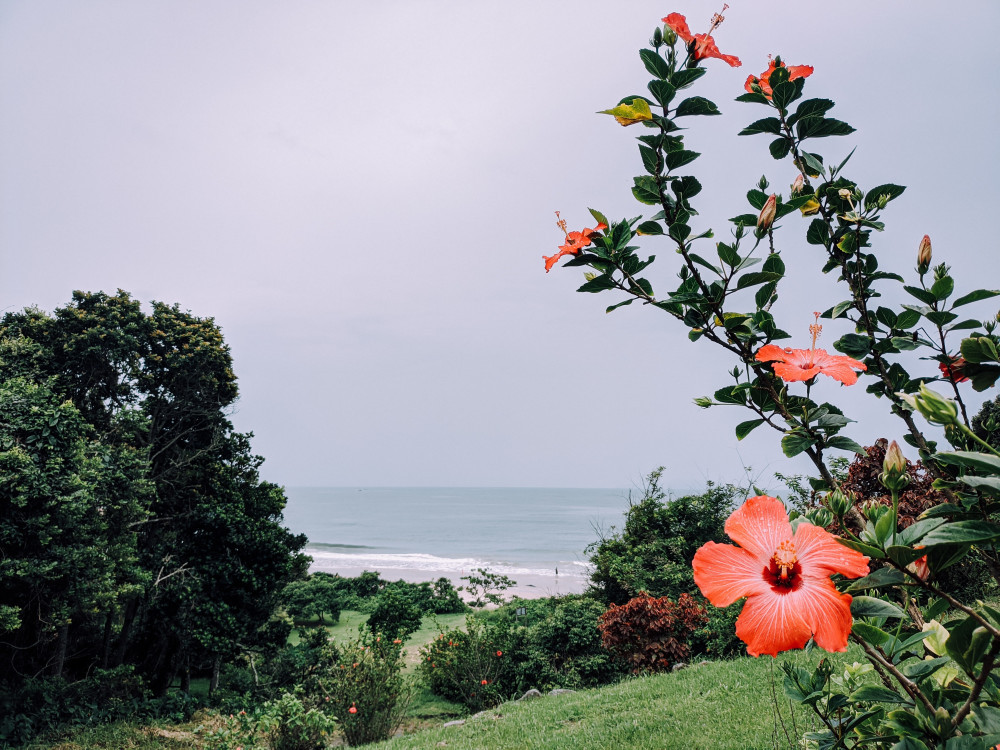 The-Hibiscus-Story-Journeying-Back-to-the-Islands-Oceanview